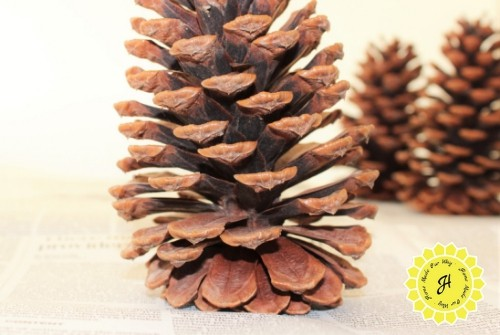 leaning pine cone