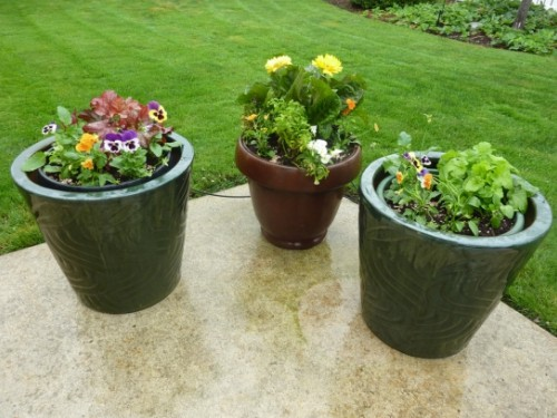 three flower pots on a patio