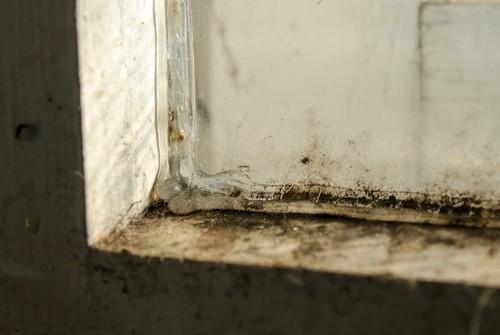 mold growing in window sash